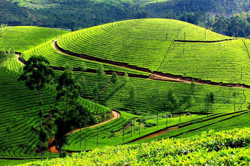 Kerala Tour Package with Munnar