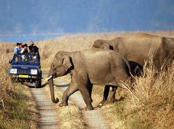 Corbett National Park Tour 1
