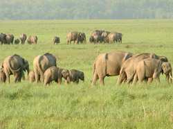Corbett National Park Tour 2