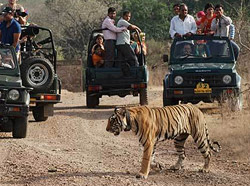 Corbett National Park Tour 3