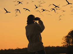 Indian Bird Watching Tour