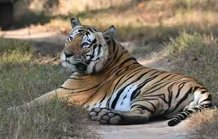 Golden Triangle Tour with Corbett and Ranthambore